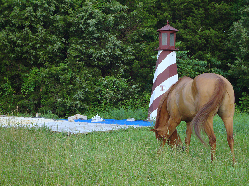 Therapeutic sensory trail - could be  Chincoteague!