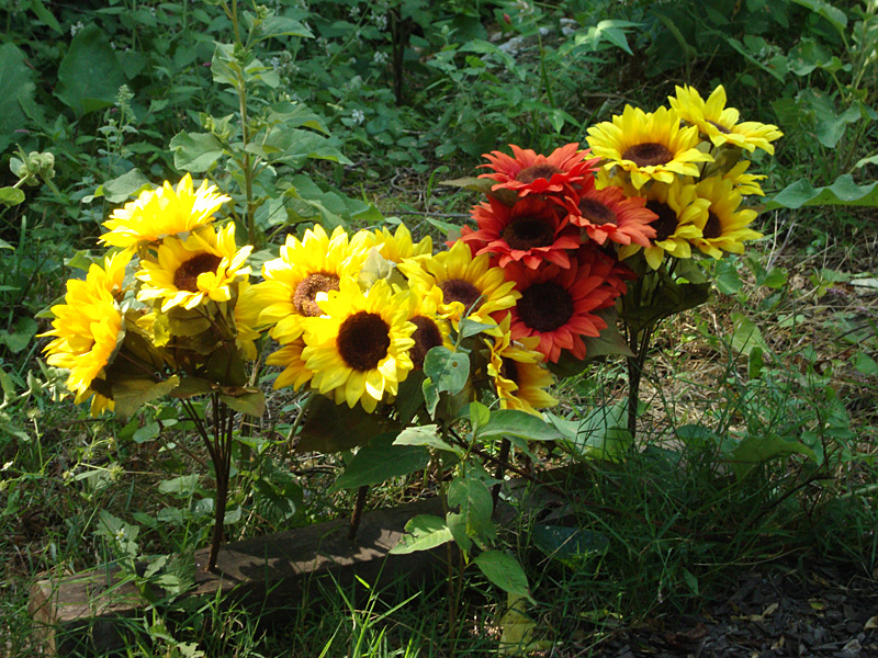 flowers along the sensory trail of the Enchanted Forest