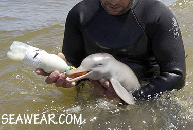 rescued baby dolphin being bottle fed
